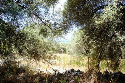 Tsoukalades-Elia-02.jpg
